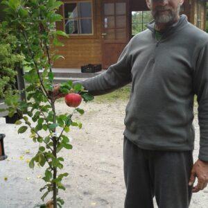 Sammasõunapuud