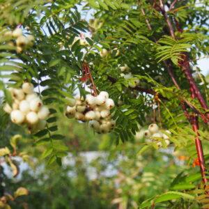 Lehtpuud